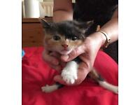 I offer a kitten