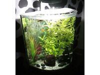Complete aquarium bundle