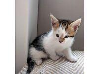 Beautiful ginger tabby kittens female male for good home