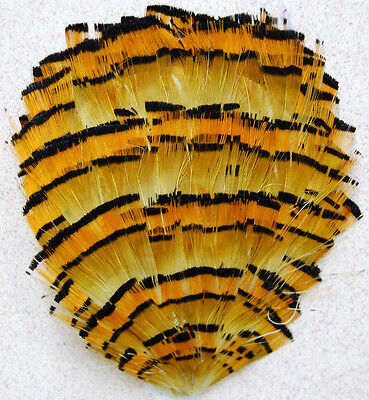 Orange Blossom Halloween Costume (12 Pcs FEATHER PADS - Orange Blossom Special #P75)