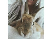 Charlotte the bunny
