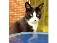 Smudge Boy Cat wants good home with outdoor space
