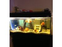 140litre Fishtank with 20 fishes and all accessories £300