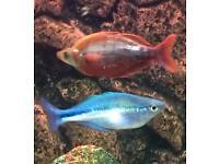 Stunning Tropical Fish
