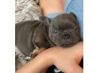 Super Cute Quality Puppies