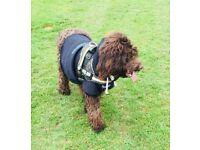 Dog walking service Maidstone