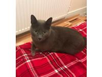 Missing grey female cat