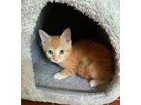 10 weeks old kitten