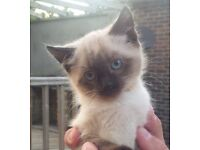 A gorgeous male kitten needs a loving home.