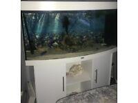 Jewel fish tank 4 ft wide