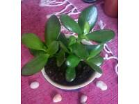 Plant for sale - £3