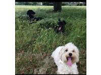 Waggy Walkers - Dog walking service in the Wavertree and surrounding areas