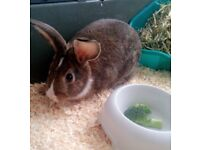 Female rabbit includes cage, litterbox, waterbottle, hay
