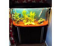 fishtand&stand & fish