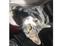 Kitten for sale ASAP
