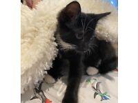 5 lovely kittens ready for new home