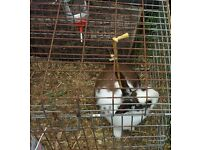 Our Rabbit is looking for a new home, incl. hutch