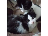2 KITTENS READY FOR NEW HOMES