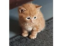 Kittens now all reserved