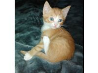 2 stunning kittens available now