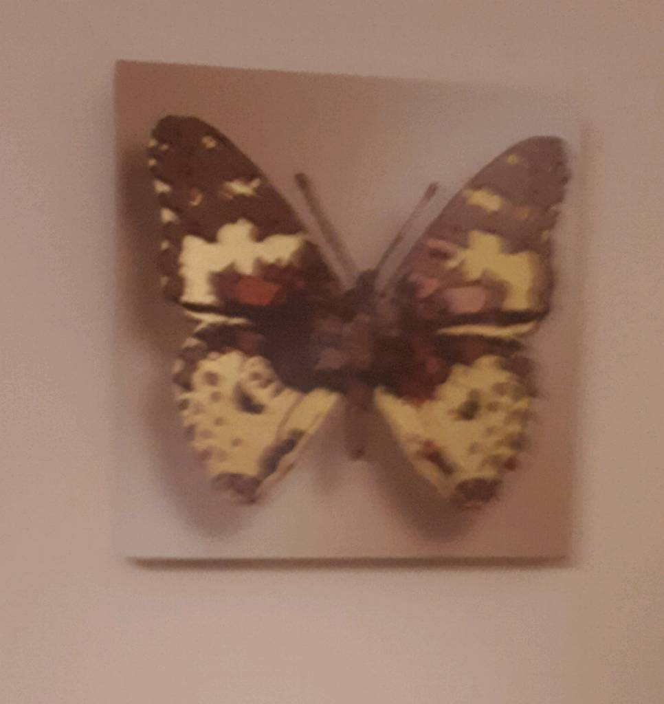 6 butterfly pictures