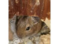 Three degus looking for their forever home.