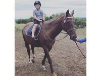 Honest genuine horse for sale