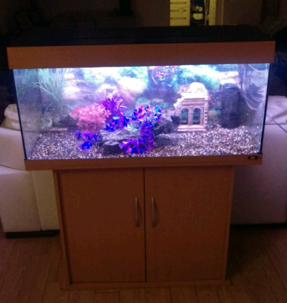 Juwel Rio 180L Tropical Fish Tank Setupin Morpeth, NorthumberlandGumtree - Juwel Rio 180L Fish Tank Setup Comes with all of the below Juwel Rio 180L TankJuwel Rio Fitted Stand Original Working Light UnitInternal Filter Decorative BackgroundGravel Decorations not included