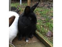 Lovely female rabbit