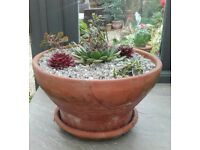 Terracotta pot planted with succulents