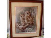 FRAMED PICTURE OF A PAIR OF TAWNY OWLS