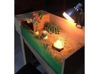 Tortoise enclosure and setup