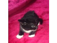 4 kittens which are 8 week old, ready for rehoming