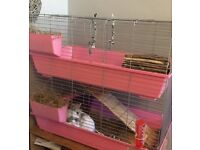 Two female rabbits and double hutch