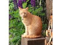 Missing ginger cat from BL5 area since 3rd December