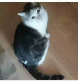 Missing Cat in Jarrow