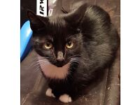 Young black and white female looking for a forever home- must be collected