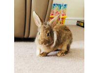 9 week old bunnies