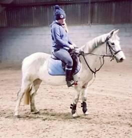 12.2hh 5 yr old mare