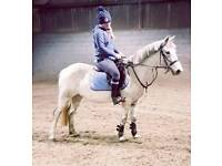12.2hh 5 yr old mare