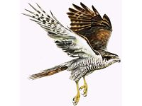 Bar staff required for The Sparrowhawk