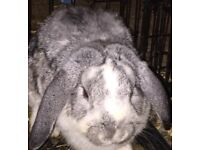 2 gorgeous, v friendly female rabbits for rehoming!