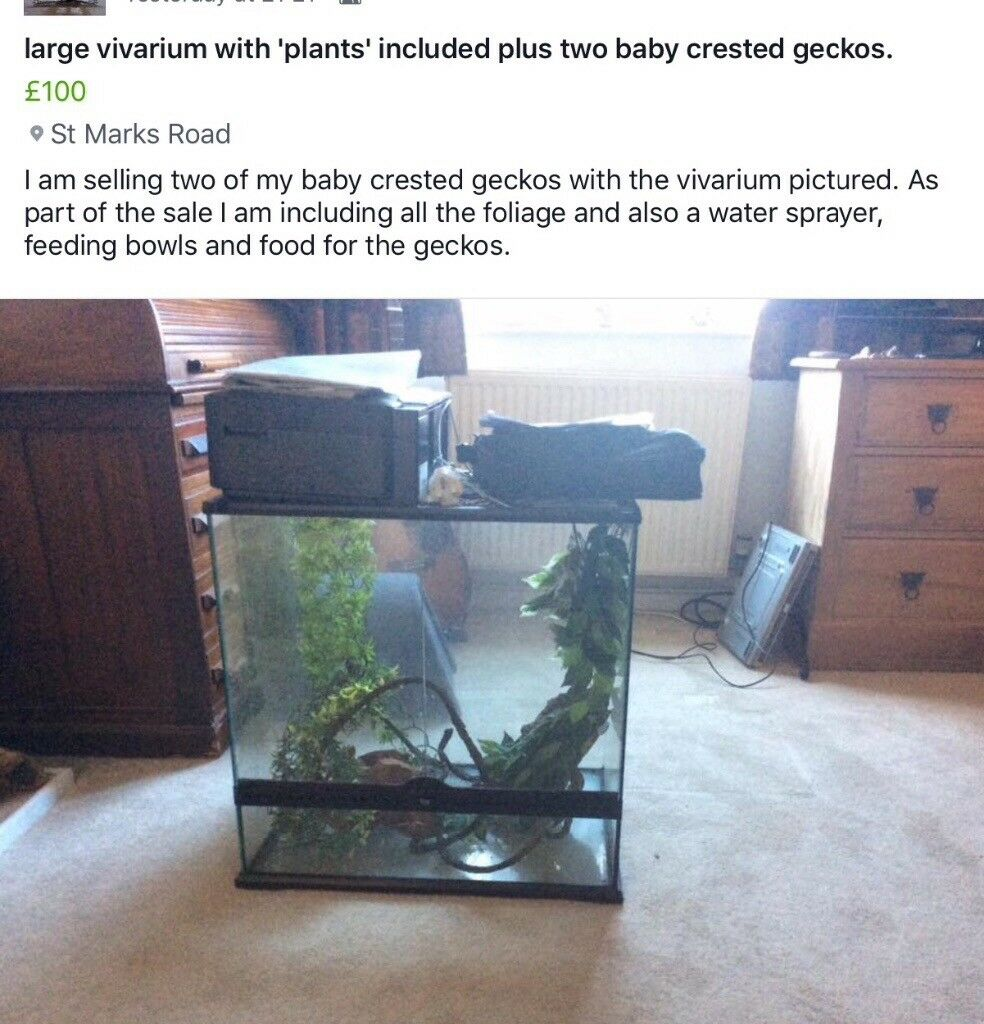 Vivarium and two crested geckos and foliage, water/feeding bowls, sprayer etc.
