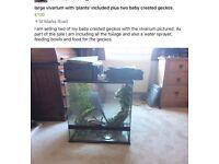 Vivarium and two crested geckos and foliage, water/feeding bowls, sprayer etc.