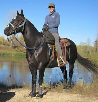 FIT RIDER ™ - HORSEBACK RIDERS THIS IS FOR YOU!!!