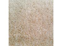 Unused Carpet Remnant
