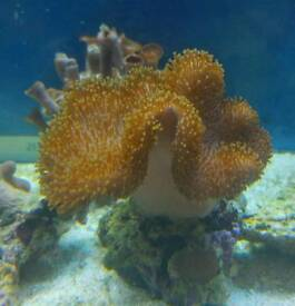 Soft corals from £15-22