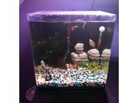 Aqua One Nano 40 55L Fish Tank Complete Set Up & Fish