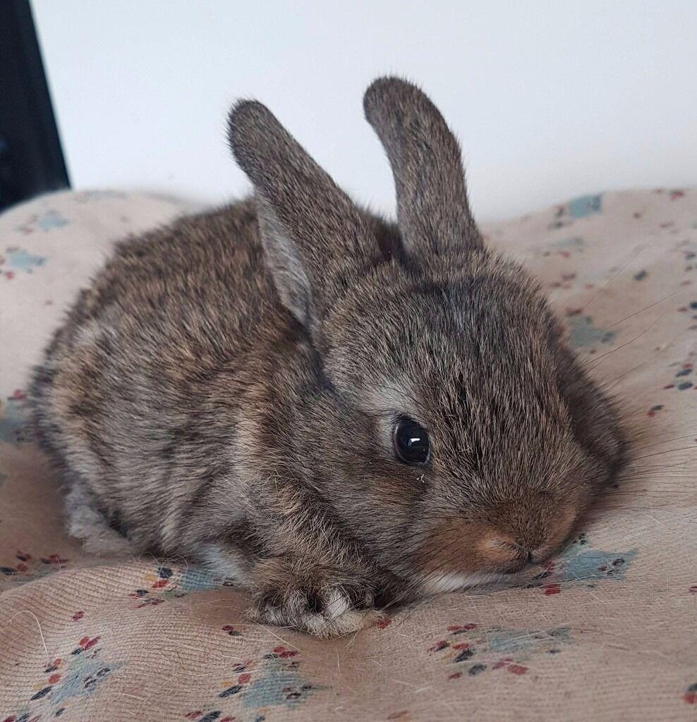 Very Friendly Baby Bunny