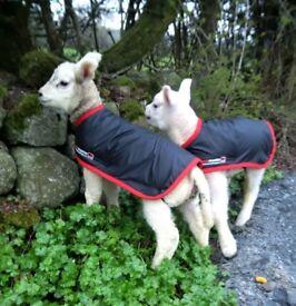 Stockmaster Waterproof Lamb Coat - Brand New